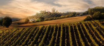 Top Italian Wines in 2015